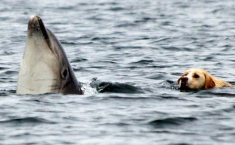 Após horas na água golfinhos salvam cão de se afogar