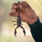 Escorpião é considerado o signo mais poderoso, estes 16 motivos provam isso