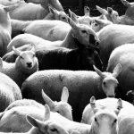 Na maioria das vezes a ovelha negra é a pessoa mais sadia da família