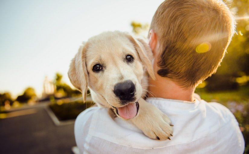 A perda de um animal de estimação dói igual à de um familiar
