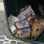 Mulher deixou cachorro amarrado e doente no lixo, mas esqueceu a lei do retorno