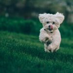 Os cães acreditam que os donos são seus pais, revela pesquisa