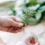 Sabonete caseiro de alecrim combate envelhecimento e inflamações das articulações