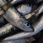 Cozinheiros do mundo inteiro elegem Peixe de Portugal como o melhor