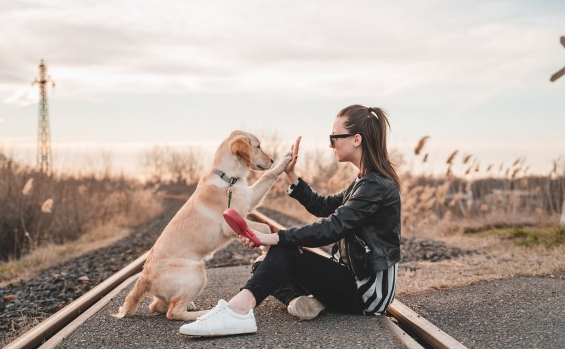 Pessoas preferem a companhia de animais do que pessoas