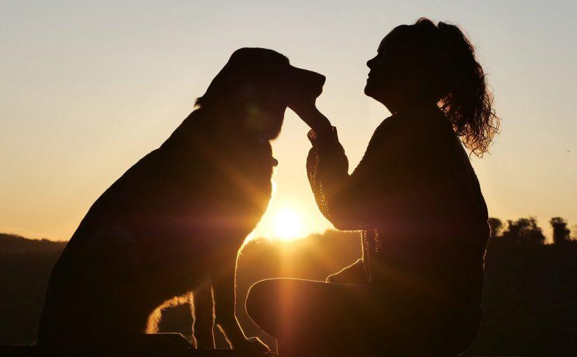 Assim acontece a conexão entre animais de estimação e seus donos