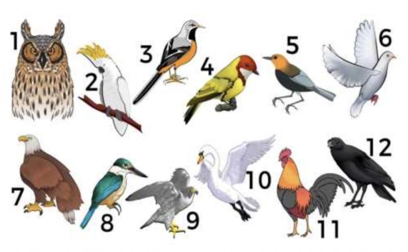 O que a ave do mês de nascimento revela sobre sua vida