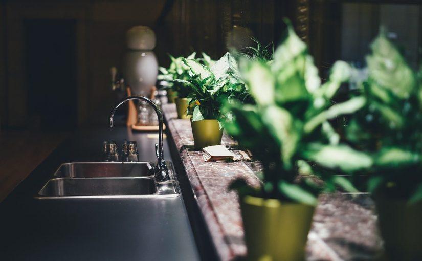 5 plantas e ervas que você deve ter em casa para afastar o mal