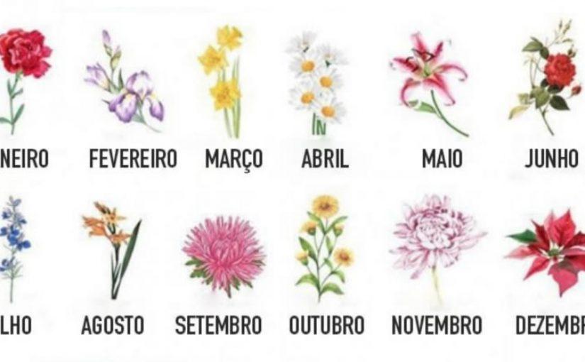Escolha a flor do seu aniversário e veja sua vida