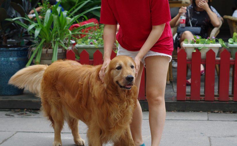 Esta é a raça de cães mais compatível com o seu signo