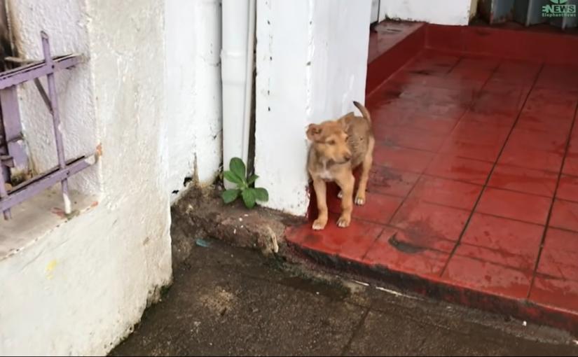 Cachorrinha abandonada faz de tudo para ser notada e ganha uma nova vida