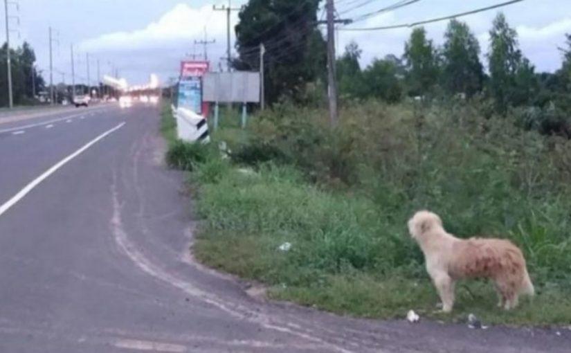 Cachorro espera 4 anos na mesma estrada para reencontrar o dono, sua lealdade é comovente