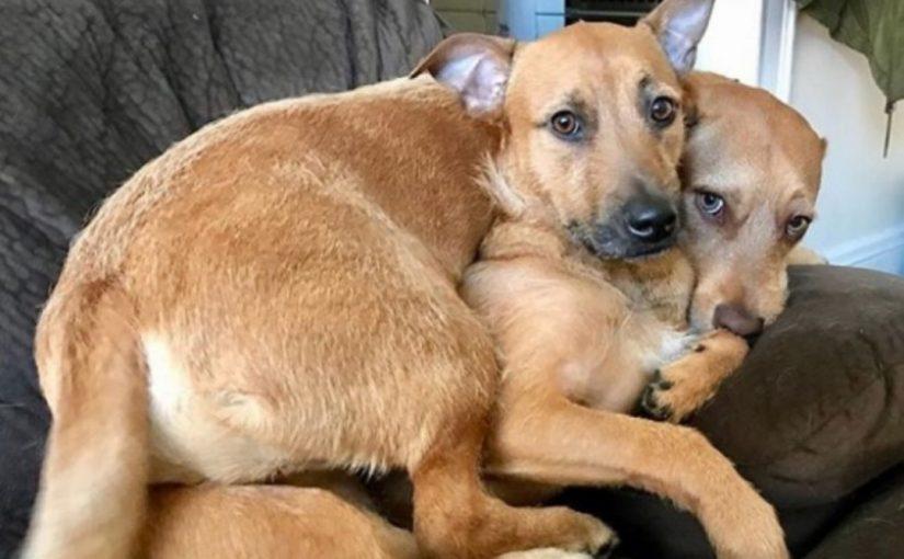 Cachorro mostra que anjos têm calda e quatro patas, ao resgatar seu amigo