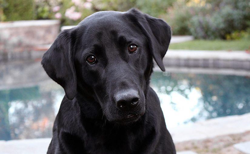 Cães conseguem identificar maldade na alma das pessoas, revela estudo