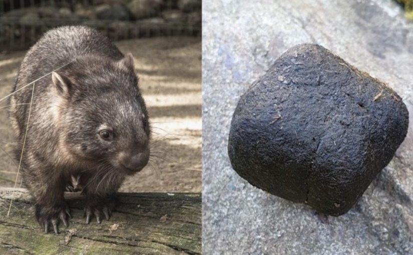 5 curiosidades impressionantes sobre animais, nunca imaginei isso