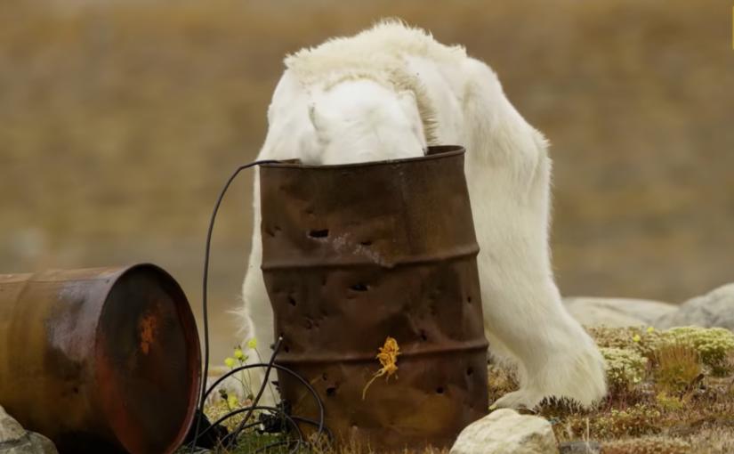 Fotógrafos ficam abalados ao ver urso polar passando fome