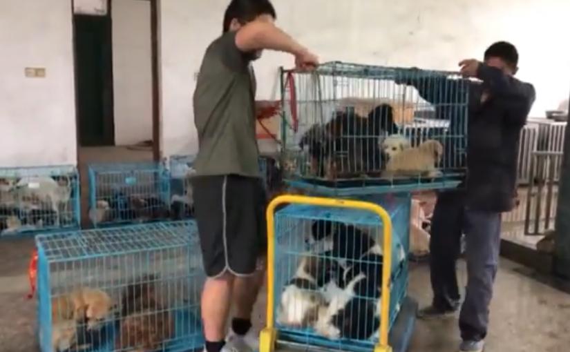 Monge budista procura lar para os 8.000 cães vadios que salvou das ruas