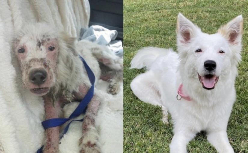 O antes e depois de animais que mostram a enorme importância da adoção