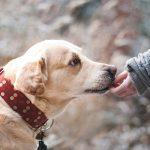 Pessoas preferem a companhia de cães e evitam humanos, aponta pesquisa