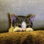 Sempre avise seu gato quando for sair de casa