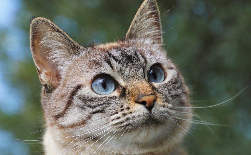 Ter um gato é melhor que ter um cão, revela ciência
