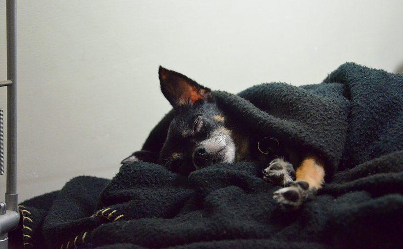 O seu cão gosta de dormir com você por estes 5 motivos