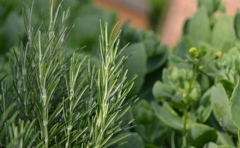 10 ervas sagradas que livrarão a sua casa de energia negativa